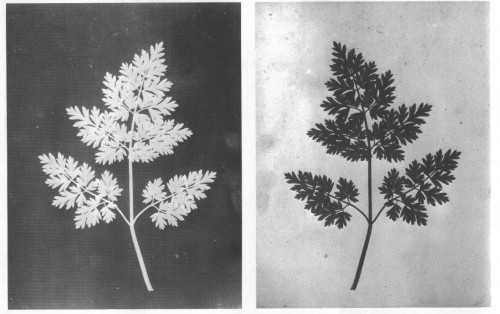 H.Fox Talbot 1842,1843 Positivo-Negativo