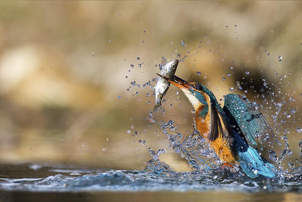 Foto di Marco Redaelli