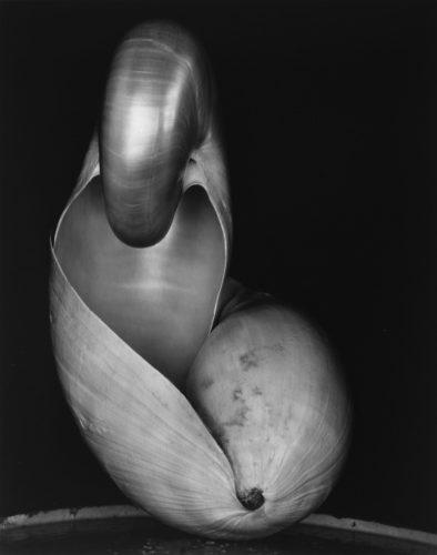 Foto di Edward Weston